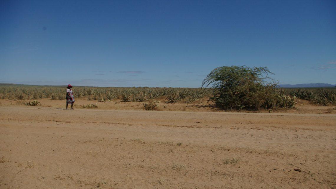 Sécheresse dans le Sud de Madagascar : «Fiavota, toseke vonje aigne» déployé pour 26 000 familles durant quatre mois